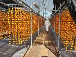 柿干し作業