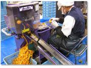 市田柿の皮剥き作業